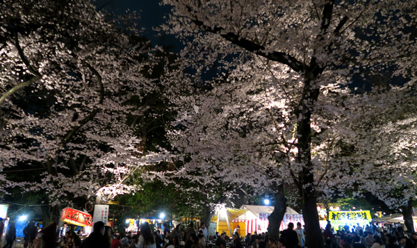 160403sakura2.jpg