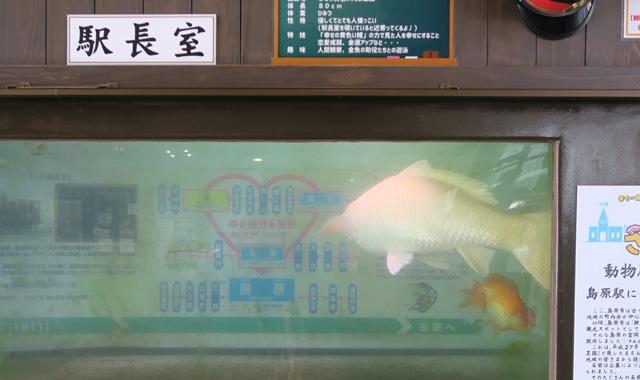 170908shima3.jpg