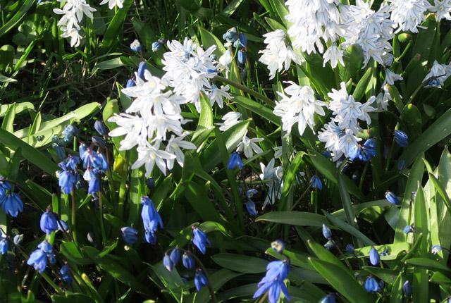 180428hel-flower.jpg